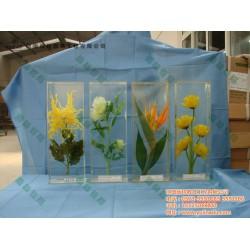 雨林教育(图)_植物种子传播方式标本_标本