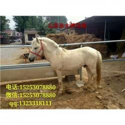 薛城区哪里养马的多