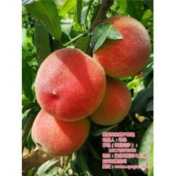 桃树苗种植说明,枣阳桃花岛,黄冈桃树苗种植