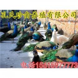 附近有孔雀养殖场吗附近有出售商品孔雀的吗