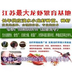 孟州小龙虾种苗价格《稻田养虾技术视频》