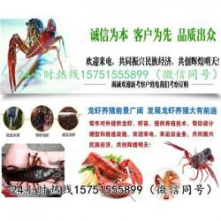 砀山县龙虾种苗价格……龙虾什么时候放苗
