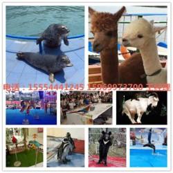 精彩海狮表演租赁红河州海狮表演主题活动