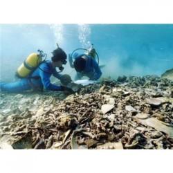 云南省潜水安装工程公司潜水作业潜水摄相