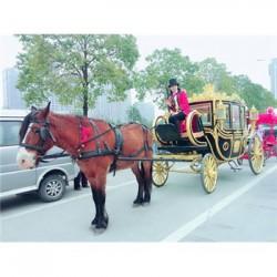 北京出租马车旅游观光马车价格马车的产品