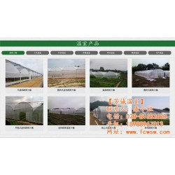 今 日 中 国 山东红富士苹果70以上出租姜库