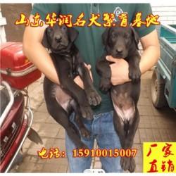 宁夏中卫黑狼犬小狗多少钱一只